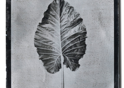 Leaf-1-mixed-media-on-aluminum