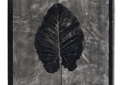 Leaf-2-mixed-media-on-aluminum
