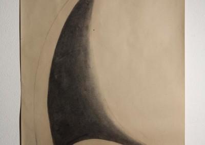 bis Shark