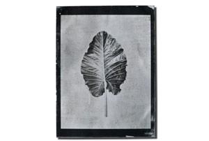 leaf1_tmb