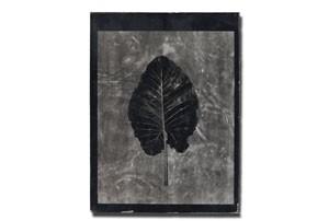 leaf2_tmb