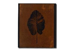 leaf3_tmb