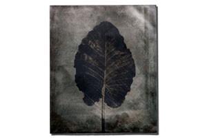 leaf5_tmb