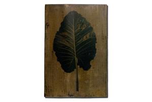 leaf7_tmb